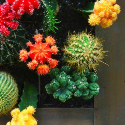 Living Wall Cactus Garden