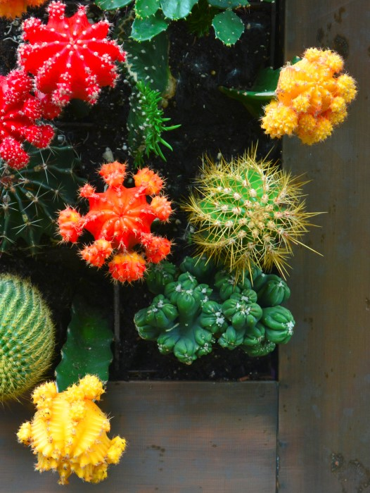 How To Build A Vertical Cactus Garden