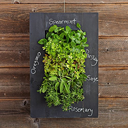 Indoor Herb Garden with Chalkboard Frame