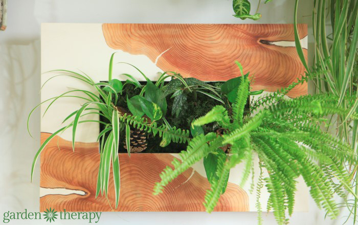 One-of-a-kind wood veneer wall planter from ByNature Studio Tour