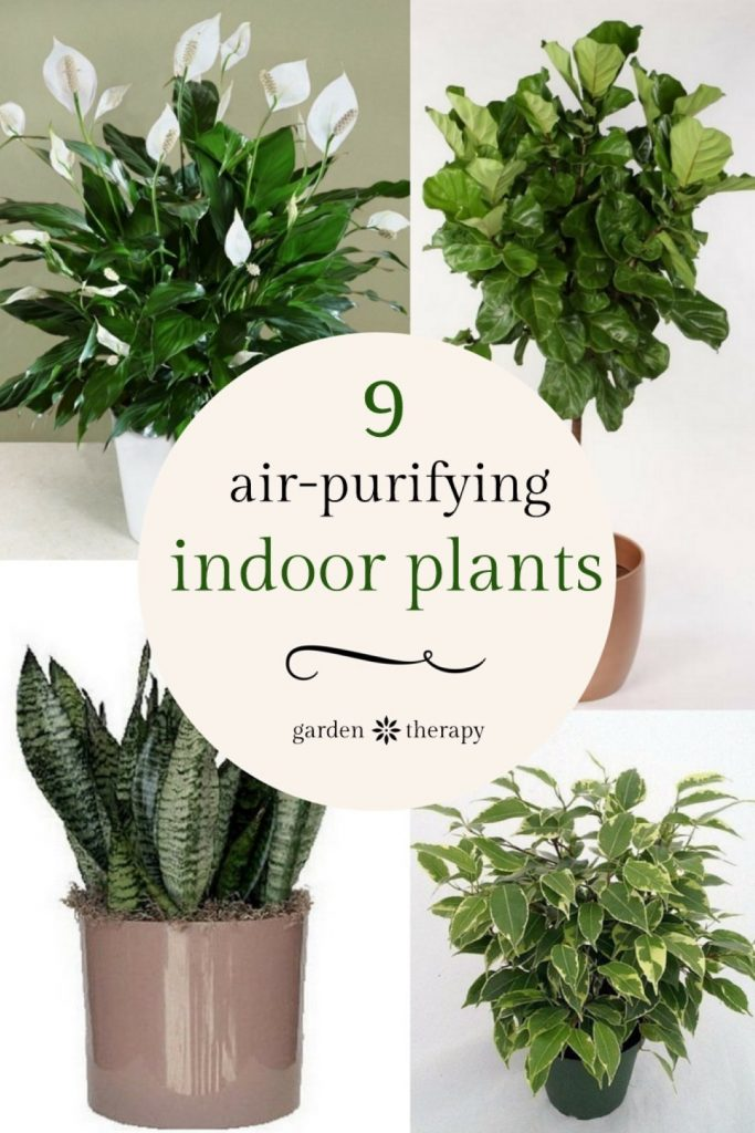office plants that don t need sunlight 5 office plants that don 39 t need sunlight plants for. Black Bedroom Furniture Sets. Home Design Ideas