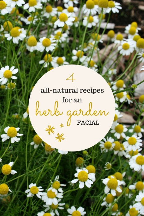 exfoliating sugar scrub - herbal mask - chamomile toner - rosewater cream