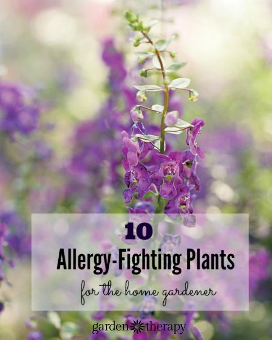 10 Allergy-Fighting plants for the home gardener