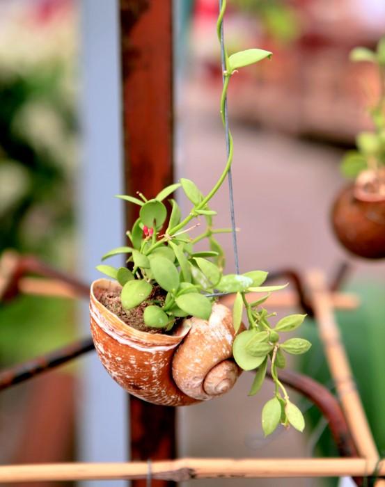 Adorable Hanging Seashell Planter So Easy To Make Too