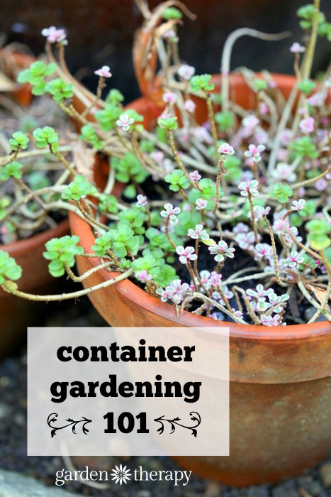 The secrets to successful container gardening - Container gardening basics ...