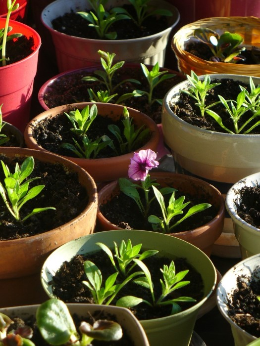 Container garden planting and care instructions