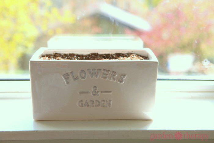 Flowers and Garden Planter from How to Make Lollipop Flowers