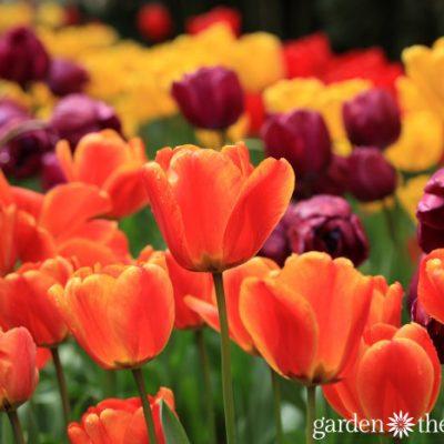 10 Tasks to Prepare Your Spring Garden