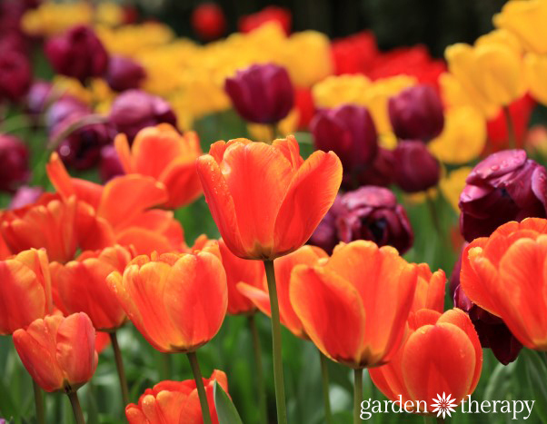 Get Ready For Spring Gardening With This Guide