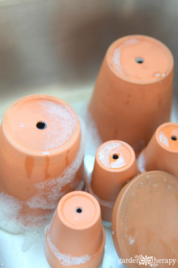 Properly clean terracotta pots to keep plants healthier