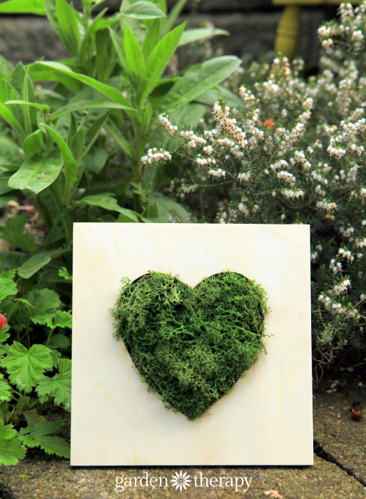 Make wall art with reindeer moss in 10 minutes