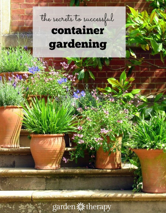 These Are The Essential Tips For Growing A Successful Container Garden