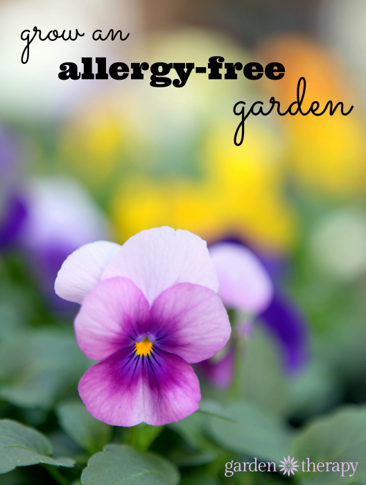 This is revolutionary for people with allergies or asthma - stop allergies by growing allergy-fighting plants
