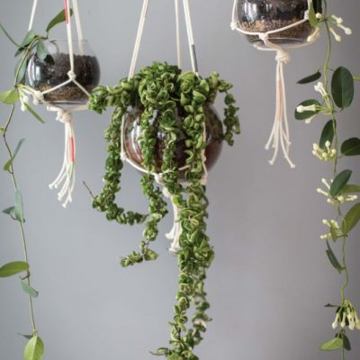 How to Make Modern Macrame Plant Hangers Step-by-Step