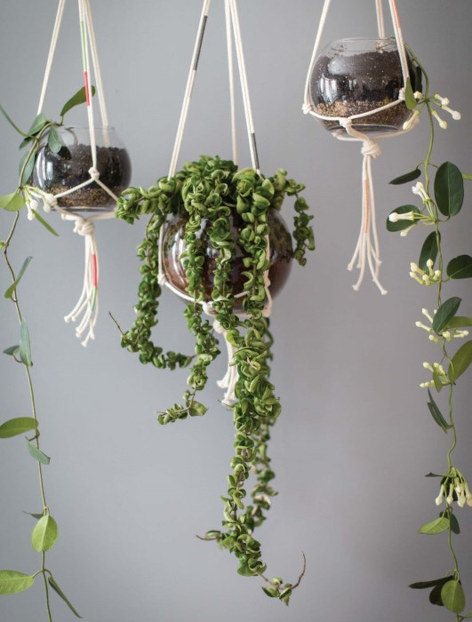 contemporary indoor plants | american hwy