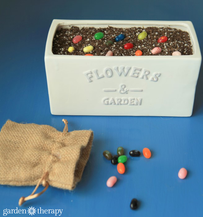 planting magic beans from How to Make Lollipop Flowers