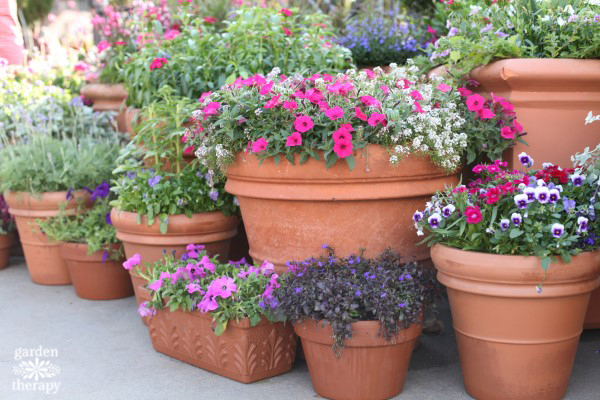 How to grow a beautiful container garden
