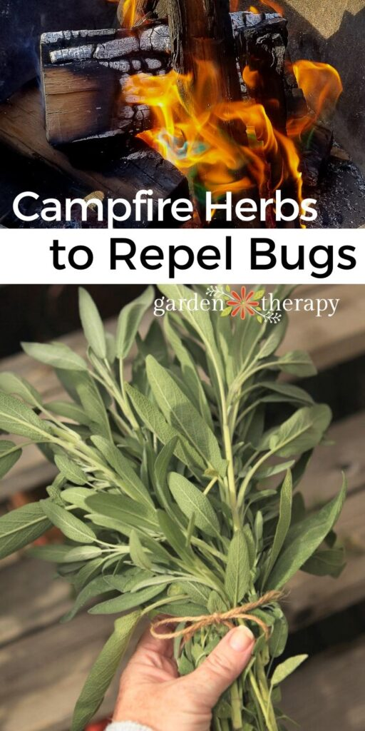 Herbs to burn in a campfire to repel mosquitos