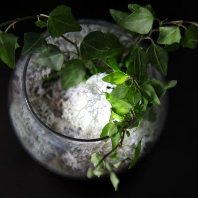 Wait Until You See This Terrarium Nightlight!