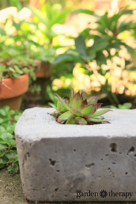 DIY concrete garden pot made using a mold