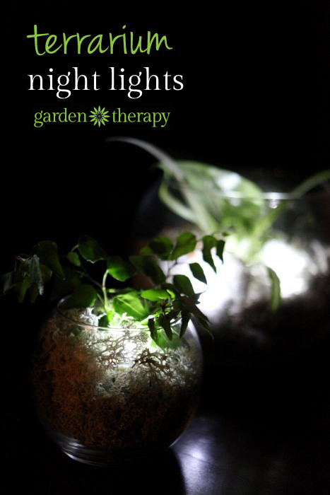 How to make a night light terrarium