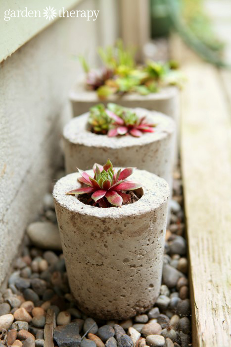 Succulents in concrete pots made with a DIY mold
