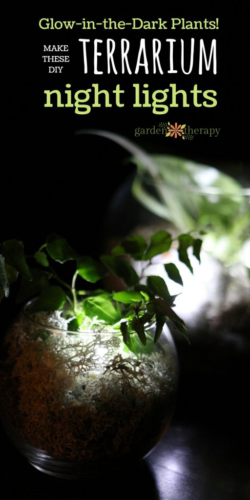 Make this unique glow-in-the-dark terrarium with real plants to use as a night light