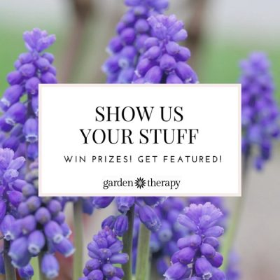 Show Us Your Garden Therapy!