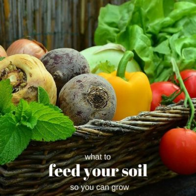 Soil Food for Greener Gardens: Find the Best Amendments in Your Own Backyard