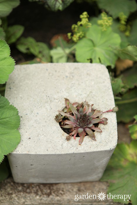 gorgeous and unique square cement planter DIY project