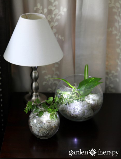 make nightlight terrariums