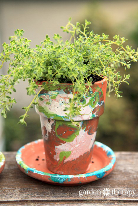 variegated thyme in a DIY nail polish marbled terracotta garden pot