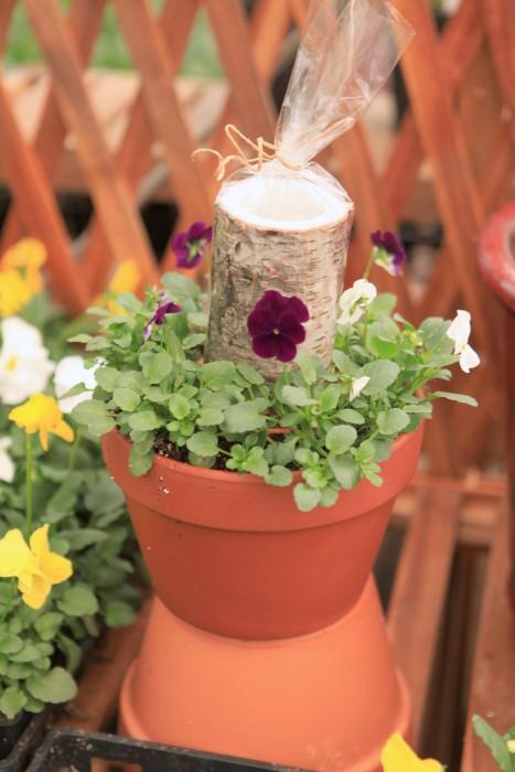viola candle planter idea