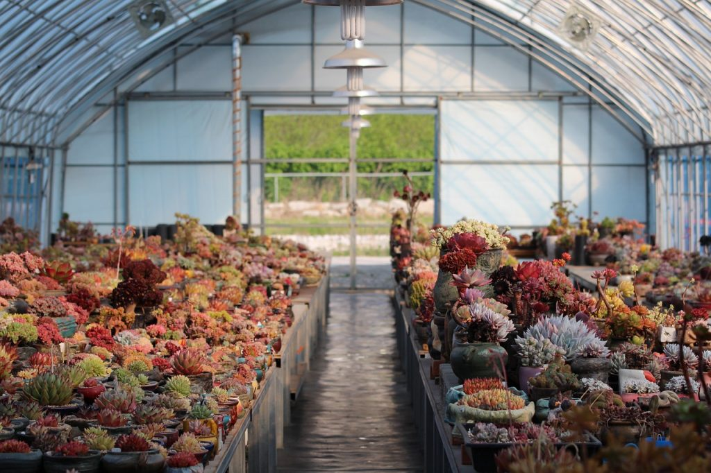 Beautiful greenhouse filled with succulents