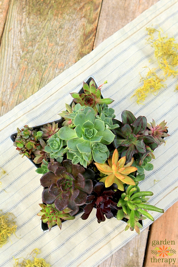 Celebrate Summer With This Shooting Star Succulent Planter DIY Project