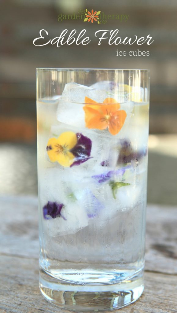 How to Make the Perfect Edible Flower Ice Cubes