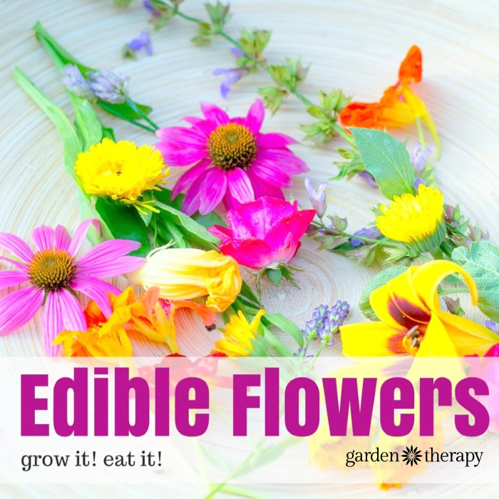 Edible Flowers - 10 of the best edible flowers you can grow in your garden, and what they taste like