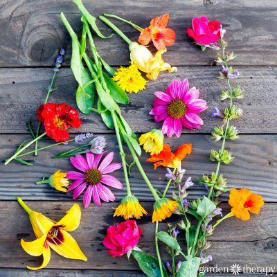 The Dirt on Edible Flowers (and the Top Ten You Must Try!)