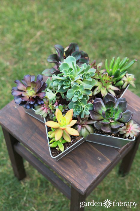 Finished succulent star planter