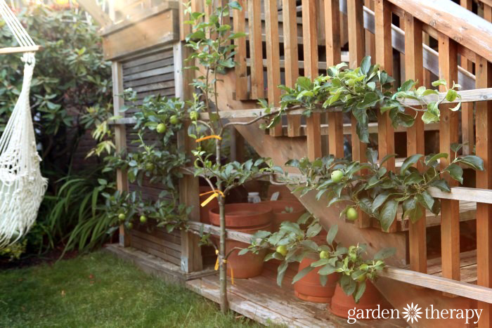 Garden Therapy Back Yard Play Garden Tour