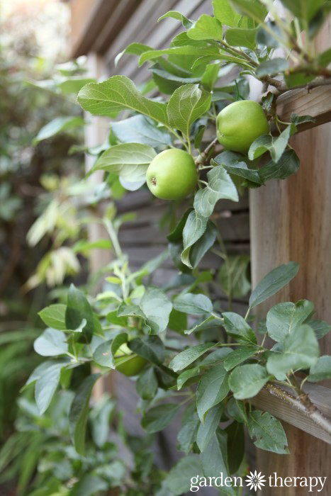 Garden Therapy Back Yard Play Garden Tour Espalier apple