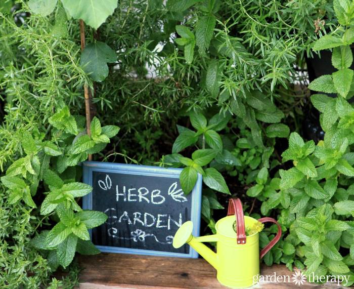 Garden Therapy Back Yard Play Garden Tour (2)