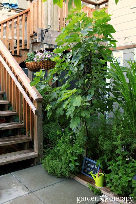 Garden Therapy Back Yard Play Garden Tour (3)