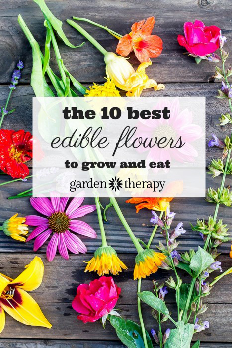 Grow it! Eat it! edible flowers can pretty up a salad, soup, or cupcake. Here are the 10 best.