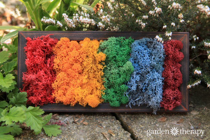 How To Make Moss Art In A Rainbow Of Colors