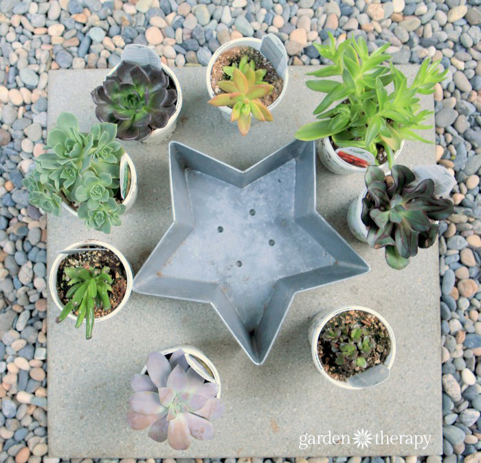 How to make a succulent star