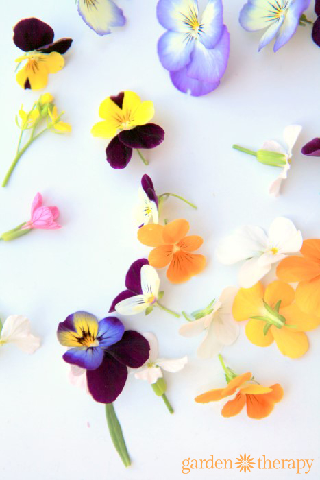 How to use edible garden flowers like violas