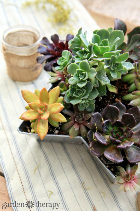 Set the table with succulents - how to male this succulent star