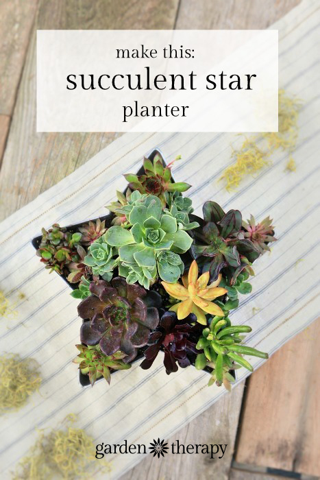 Shooting Star Succulent Planter