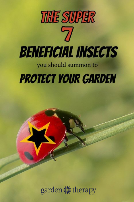 The 7 insects you should know how to identify - they are the superheroes of the garden